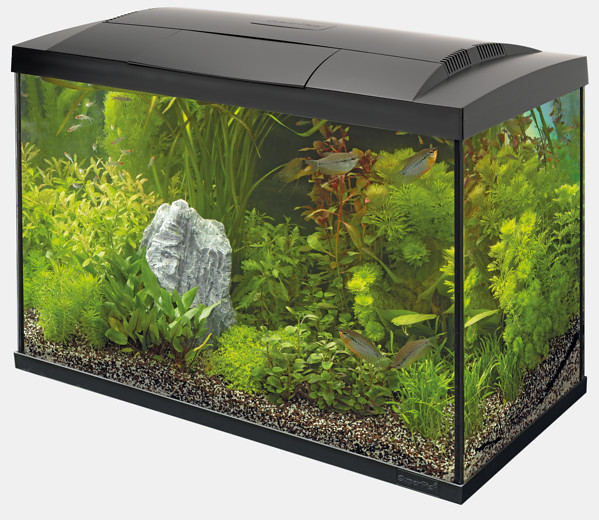 Aquarium Set Superfish Start Tropical 70 Kit schwarz