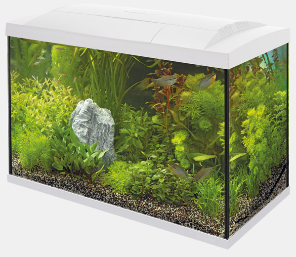 Aquarium Set Superfish Start Tropical 70 Kit weiss