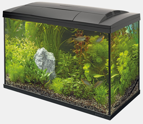 Aquarium Set Superfish Start Tropical 100 Kit schwarz